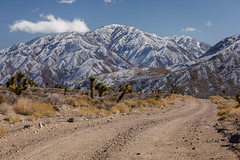 Rural Road Near Death Valley (Jeff Sullivan (www.JeffSullivanPhotography.com)) Tags: road joshua trees mojave desert usa landscape nature travel photography canon eos 5dmarkiv trip photo copyright 2019 jeff sullivan february snow nevada blm bureauoflandmanagement