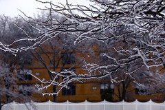 frozen tree ... (mariola aga) Tags: winter trees branches ice frozen building neighborhood dof bokeh fence white orange