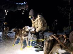 20190206_231630.jpg (Roshine Photography) Tags: huskies winter environmental dogcare 36hourrestart yukonquest dogyard dawsoncity yukonterritory snow yukon canada ca