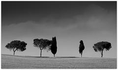 vor dem Gewitter (EOS1DsIII) Tags: eos1dsiii italia italy italien toscana tuscany trees bäume himmel wolken wetter gewitter aoi elitegalleryaoi bestcapturesaoi