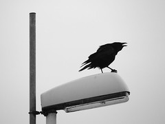 kiel_P3061948 (ghoermann) Tags: kiel bird