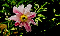 Flowers (ost_jean) Tags: flowers fleurs bloemen nature nikon d5200 tamron sp af 1750mm f28 xr di ii vc ld ostjean bokeh macro flickr colors