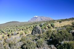 Kibo summit at Kilimanjaro (Ralph Apeldoorn) Tags: kibo kilimanjaro mountkilimanjaro mountain volcano tanzania tz senecio