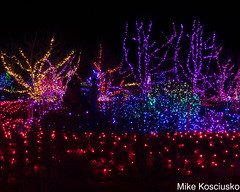 915A6338 (mikekos333) Tags: 2018 december christmas christmaslights coastalmainebotanicalgardens boothbay