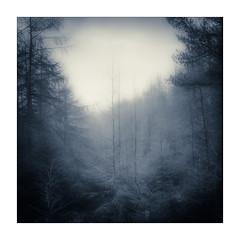Skinny (gerainte1) Tags: hasselblad501 film portra400 blackandwhite silverefx forest pines woodland