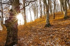 Seasons (Baubec Izzet) Tags: baubecizzet pentax landscape forest nature sun autumn winter