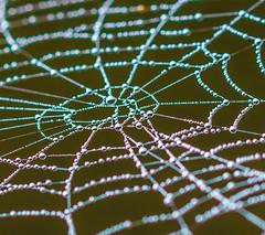 Winter Web. (Omygodtom) Tags: web rainbow raindrop macro dof d7100 tamron tamron90mm digital colorful usgs pdx art abstract