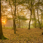 Autumn Woodland Sunrise by Steve Baldwin