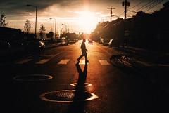 walking the dog (ewitsoe) Tags: nikon pnw seattle street travel usa washington erikwitsoe erikwitsoecom urban sunrise morning man boat row sea water sound ocean sun winter light walking dogs afternoon sunny shadows crosswalk