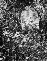 Sad (aquanout) Tags: blackandwhite b£w monochrome cemetery grave headstone foliage
