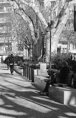 Old and Young... (Last Border of the Picture) Tags: park ville city town jardin garden pavement pavé nîmes esplanade gard languedoc occitanie france europe young jeune âgé old walk sit marche assis banc bench arbre tree platane plane