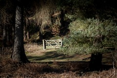 The Gate (wilkinsong) Tags: wood gate