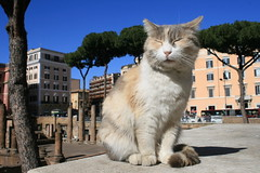 Kitty (ja.zogy) Tags: cat city roma kitty animals