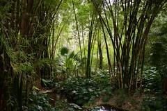 Jardín Botánico-Histórico, Málaga, Spain (AperturePaul) Tags: málaga spain europe nikon d600 garden plants botanical nature bamboo tree trees andalusia jardín botánicohistórico concepción