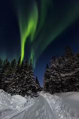 Z19_0255 LT (Zoran Babich) Tags: lainio lapland lappi finland suomi auroraborealis northerlights trees snow winter