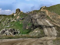 Hanging Tree (davidseibold) Tags: america california cloud colororange dirtroad fiddleneck grass jfflickr kerncounty photosbydavid plant postedonfb postedonflickr rancheriaroad road rock sky tree unitedstates usa wildflower bakersfield unitedstatesofamerica