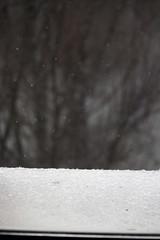 Der Schnee, die Bäume. / 25.01.2019 (ben.kaden) Tags: berlin winter schnee 2019 25012019