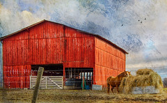 Hay Day (michaelvines) Tags: rural country horses landscape kentucky barn