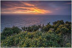 Sunset over Ireland (Antony Fleming) Tags: irishsea ireland sunset gorse yellow orange cliffs portpatrick scotland dumfriesandgalloway