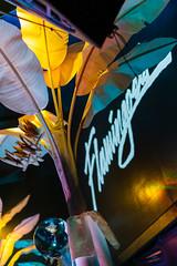SF_Show58 (Hafstadphoto) Tags: yung bae aritus night tempo san francisco flamingosis life show future funk