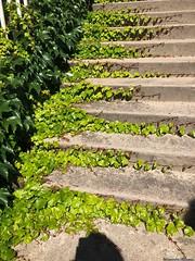 escalier-lière© (alexandrarougeron) Tags: photo alexandra rougeron nature plante environnement flickr