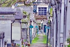 121 - Paris - Février 2019 - le cimetière de Montmartre (paspog) Tags: paris france cemetery cimetière friedhof cimetièredemontmartre montmartre février februar february 2019