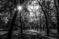 An afternoon in the park (Jose Rahona) Tags: parque park jardin garden arboles trees bancos bench caminos paths sunflare reflejo sol hojas leaves blancoynegro blackandwhite bw monochrome