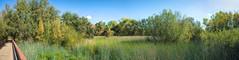 Wetlands in November Panorama (randyherring) Tags: ca california centralcaliforniavalley cosumnesriverpreserve elkgrove afternoon aquaticbird nature outdoor recreational waterfowl wetlands