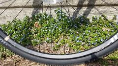 2019 Bike 180: Day 32 - Spring Is In The Air (mcfeelion) Tags: cycling bike bicycle arlingtonva wod bike180 2019bike180