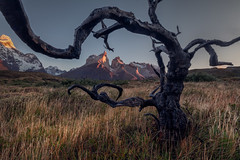 The Horns of Patagonia (Andrew G Robertson) Tags: patagonia torres del paine chile cordillera horns sunrise dead tree los cuernos
