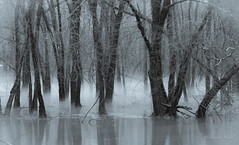 DSC_5782 (tspottr723) Tags: winter fog bw monochrome tree nature water river flood plain parsipplany nj new jersey december 2018 nikon d7000 85mm 18 mist passaic black white rain swell