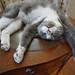 Ada Cat Yoga