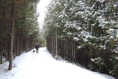w winter walk (Simon -n- Kathy) Tags: greycounty thornbury bluemountain ski skate winter snow lights night