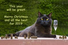 Wunderbar! (pwendeler) Tags: cat christmas xmas weihnachten blackcat schwarzekatze glasofchampaign drinkingcat chat gato sonyalphaa6500 sony