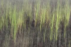 Veer Dam | 4 (tanaykibe) Tags: intentionalcameramovement icm field crops green movement abstract india maharashtra pune