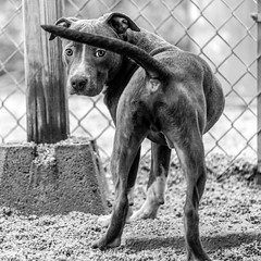 Edward18Jan201911-Edit-2.jpg (fredstrobel) Tags: dogs pawsatanta phototype atlanta blackandwhite usa animals ga pets places pawsdogs decatur georgia unitedstatesofamerica us