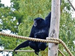 Pairi Daiza (43) (Johnny Cooman) Tags: brugelettecambroncasteau wallonie belgië bel animal dieren natuur ベルギー aaa panasonicdmcfz200 henegouwen hainaut belgium bélgica belgique belgien belgia zoo