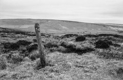 Looking for a sign (Richie Rue) Tags: post sign moors loorland yorkshire northern landscape monochrome blackandwhite bnw film analogue 35mm foma fomafomapan100 championpromicrol ishootfilm istillshootfilm filmsnotdead rambles lost outdoors