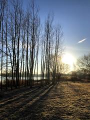 Fen Drayton Lakes (tad2106 - Trudie Davidson Photography) Tags: rspb reserve nature view landscape winter light dawn sunrise water lakes sunshine cambridgeshire