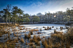 Cold (Geert E) Tags: landscape winter cold icy trees pine buitengoor mol