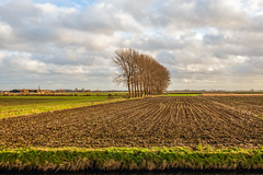 Tall trees and a stubble field (RuudMorijn-NL) Tags: agriculture autumn banks bare branch clouds corn countryside crop day ditch dusk dutch edge endless fall farming field grain green harvested horizon landscape leafless light lines maize nature netherlands nobody northbrabant outdoors perspective plant row rows rural scenic season silhouette sky stubble sunny sunset tall trees view village water winter zonzeelsepolder wagenberg noordbrabant akker landbouw snijmais stoppels stoppelveld rij hoge bomen iepen perspectief agrarisch lijnen sloot landschap herfst najaar dorp uitzicht wolken flat