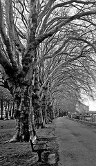 "A Walk in the Park (mdavies149) Tags: wandsworth black white ""black white"" london england trees bench"