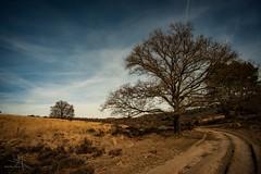 MMF-20190217131601 (MarcelMengerFotografie) Tags: nikond800e nikon veluwe posbank tokina landschap nature trees landscape