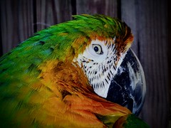 Within an Eye View! (jlynfriend) Tags: phonephoto lg parrot park woodboards art cute animal bird
