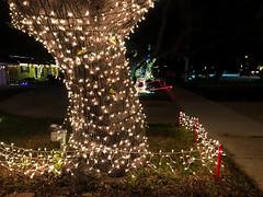 Christmas Lights Tree 3 (Lux Llama Productions) Tags: christmas lights holiday holidays winter december jan january dec decor decorations decoration prop jesus usa us unitedstates florida bocaraton house suburb hot light led cool awesome santa sleigh reindeer deer trees tree orb