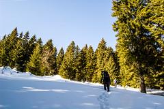 0081_DSC_2531 (marcellszmandray) Tags: kirándulás tél lucskaifátra szlovákia hó fátra ferrata viaferrata hzs