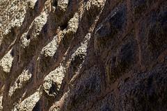 Mur de pierre (meyer.morgane7) Tags: 1200d canon sigma18250 dambach alsace castel château rock wall mur pierre