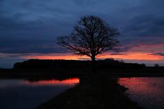 Franken Morgen (geraldtourniaire) Tags: eos6d ef 24105l natur nature landschaft licht l sonnenaufgang baum