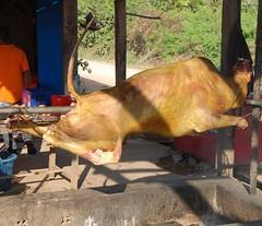 DSC_3106CambodjaPreahVihearHeelVarkenAanHetSpit (De avonturen van de Argusvlinder) Tags: cambodja preahvihear varken varkenaanhetspit spit roosteren