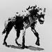 Hyène en clair-obscur